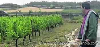 De aquellas aguas, estos lodos - Lo Mejor del Vino de Rioja La Rioja
