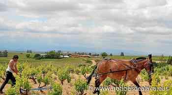 El consumo de vinos Rioja aguantó en un 2020 para olvidar - Noticias de Alava