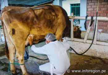 Huánuco: Analizan cumplimiento de protocolos en obtención de la leche y derivados - INFOREGION