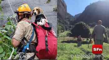 Bombeiros resgatam cadela que ficou 07 dias perdida em montanha de aproximadamente 400 metros, em Campos - SF Notícias