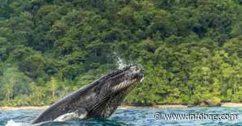 Cinco parques naturales imperdibles del Pacífico colombiano, una de las regiones más biodiversas del mundo - infobae