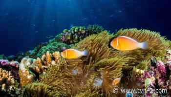 El estudio sobre los corales en el Pacífico y su importancia para la vida humana - TVN Noticias