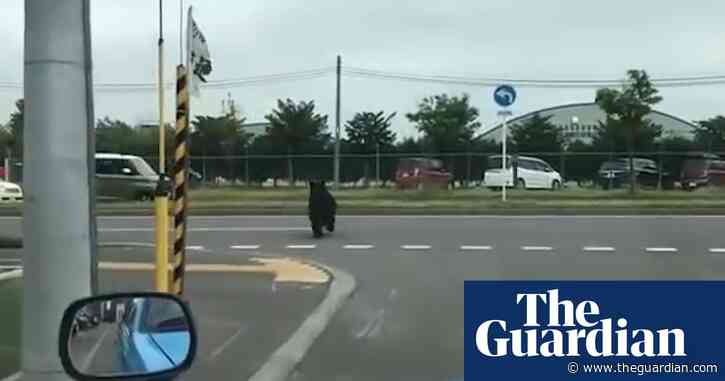Bear shot dead after rampage through Sapporo in Japan