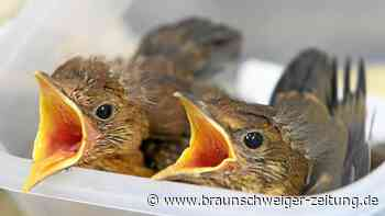 Schutzzentrum Leiferde: Wetter in Niedersachsen setzt Vögeln zu