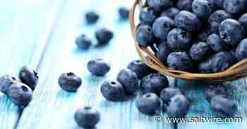 Nova Scotia blueberries and sea cucumbers a valuable combination | Saltwire - SaltWire Network