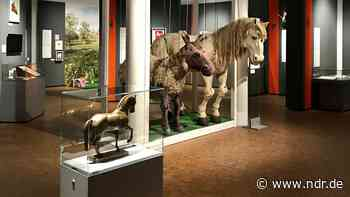 """Halla"" und ""Rosinante"": Museum in Verden zeigt Pferdestars - NDR.de"
