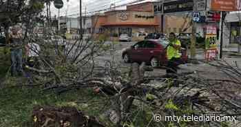 Caída de árbol se registra en el municipio de Guadalupe - Telediario Monterrey