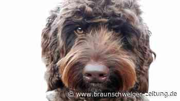 """Wie Therapiehund """"Digby"""" Menschen vor Suizid bewahrt"""