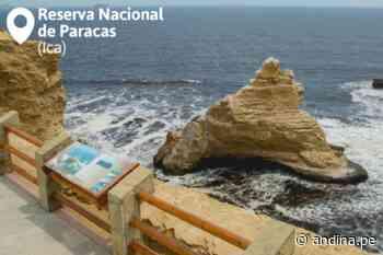 ¡Recuerda! Visita sin restricciones Paracas, Cutervo, Titicaca y otras áreas protegidas - Agencia Andina
