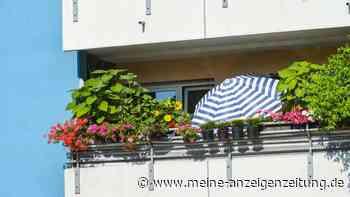 Hitze auf dem Balkon: So schützen Sie Ihre Pflanzen im Sommer