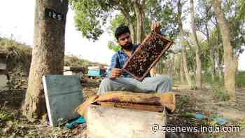 This beekeeper from Punjab is a beacon of hope for low land holders