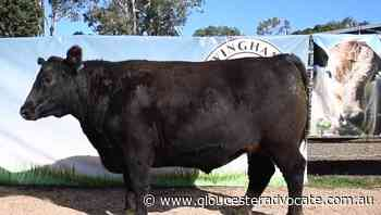 Gloucester's Allan Waldon's cattle take top places at Wingham Beef Week 2021 - Gloucester Advocate