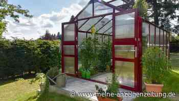Gewächshaus im Garten: Diese Punkte sind bei Auswahl und Bau wichtig