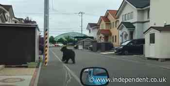 Bear on loose in Japan sees flights cancelled and schools closed as it breaks into army base