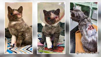 Brandwunden, ein Herzfehler und halb blind: Aufgepäppeltes Kätzchen sucht neues zuhause - RTL Online