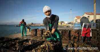 South African fishermen, oyster farmers fear power-generating ship will kill business - Reuters