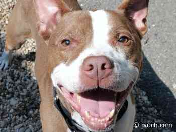 Pet Of The Week: Let Bruno Steal Your Heart - Patch.com