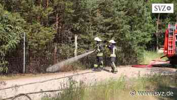 Hagenow: Brand in einer Kiefernschonung   svz.de - svz – Schweriner Volkszeitung