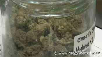 Judge halts recreational marijuana licensing in Detroit over 'likely unconstitutional' ordinance - WDIV ClickOnDetroit