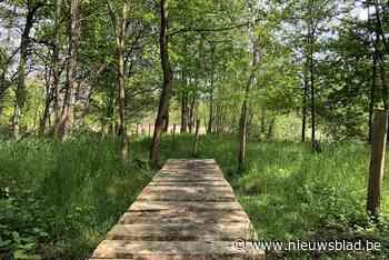 Nieuw knuppelpad maakt wandelen in vallei Molse Nete gemakkelijker