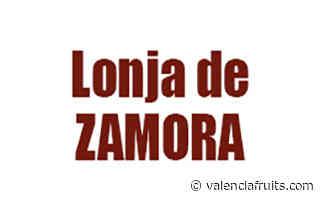Lonja de Zamora. Precios de la Mesa de Cereales, del 8 de junio 2021 - Valencia fruits