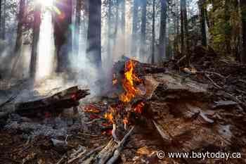Seven new fires in the northeast region
