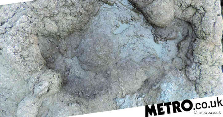 Footprints from the UK's last dinosaurs found in Folkestone
