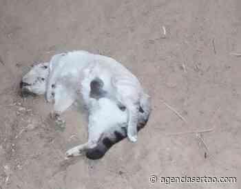 Gatos foram encontrados mortos após envenenamento em Guanambi - Agência Sertão