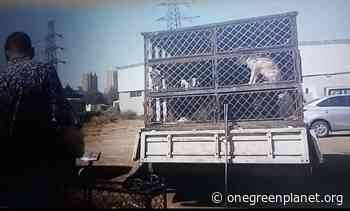 Smaller Trucks Being Used to Secretly Transport Dogs to Yulin Dog Festival - One Green Planet
