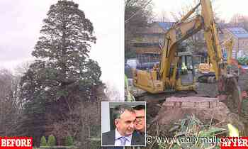 Property developer who had 90ft redwood tree cut down to make way for homes appeals £300,000 fine