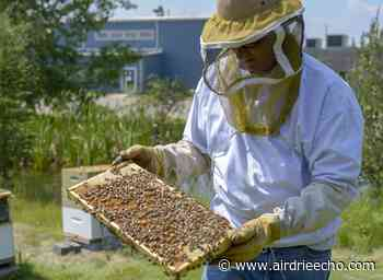 Beekeeping pilot project gets extension - Airdrie Echo