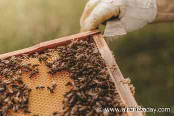 Airdrie City council extends beekeeping pilot project - Airdrie Today