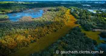 """Coberto por plantas, Rio Gravataí se transforma em """"tapete verde""""; veja imagens - GZH"""