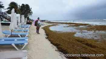 Playa del Carmen, una de las zonas más afectadas por el avance del sargazo - Noticieros Televisa