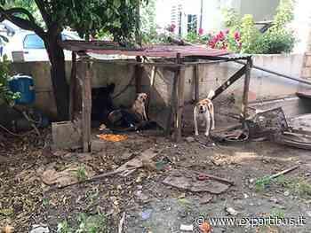 Acerra (NA), guardie zoofile OIPA sequestrano cani per maltrattamento - ExPartibus