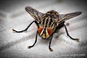 Remedios caseros infalibles (y muy económicos) para espantar a las moscas - SEGRE.com