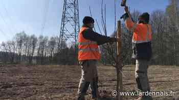 Sauvegarder la biodiversitésous le chemin de l'électricité aux Mazures - L'Ardennais