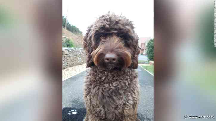 Therapy dog saves woman who was on the verge of taking her own life - CNN