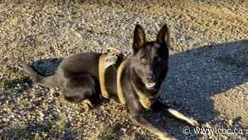 RCMP dog shot and killed in line of duty in High Prairie police operation