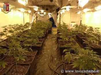 """47 chili di marijuana e 225 piantine in una cascina di Canelli: espulso dall'Italia il giovane """"coltivatore"""" albanese - LaVoceDiAlba.it"""