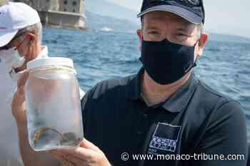 Prince Albert II releases seahorses back into Mediterranean waters - Monaco Tribune