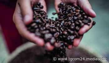 Il Turin Coffee 2021 si fa nazionale - TGCOM