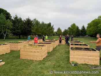 Seedlings planted in new Goderich Community Garden - Kincardine News