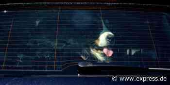 Overath in NRW: Hund in Hitzeauto gefangen, Besitzerin mit Ausrede - Express.de