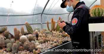 Italia incauta cactus robados y los devuelve a Chile - San Diego Union-Tribune en Español