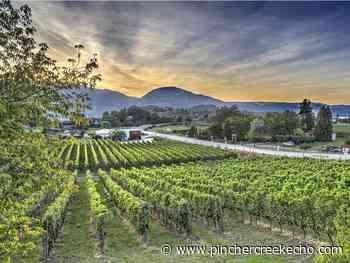 Salut: B.C. wineries embrace new virtual reality - Pincher Creek Echo