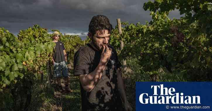 Taste of freedom: a Kurdish winemaker's journey from Manus Island to the Yarra Valley