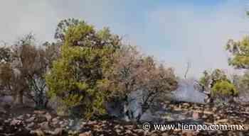 Ponen bajo control el mega incendio en Casas Grandes - El Tiempo de México
