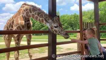 Bloomfield's Safari Lake Geneva adds giraffes to its wildlife preserve - Lake Geneva Regional News