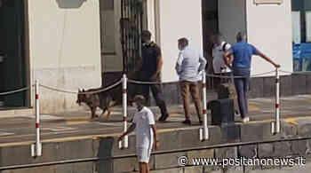 Capri, controlli della Guardia di Finanza con i cani antidroga - Positanonews - Positanonews